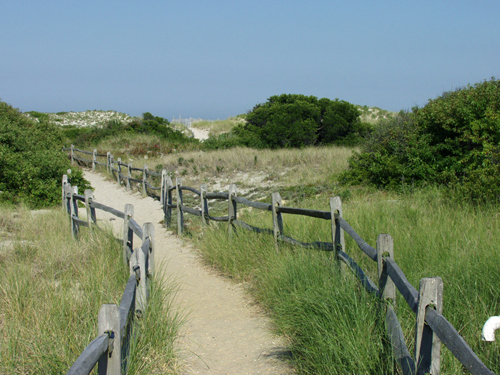 A trail at Island Beach State Park. (Supplied Photo)
