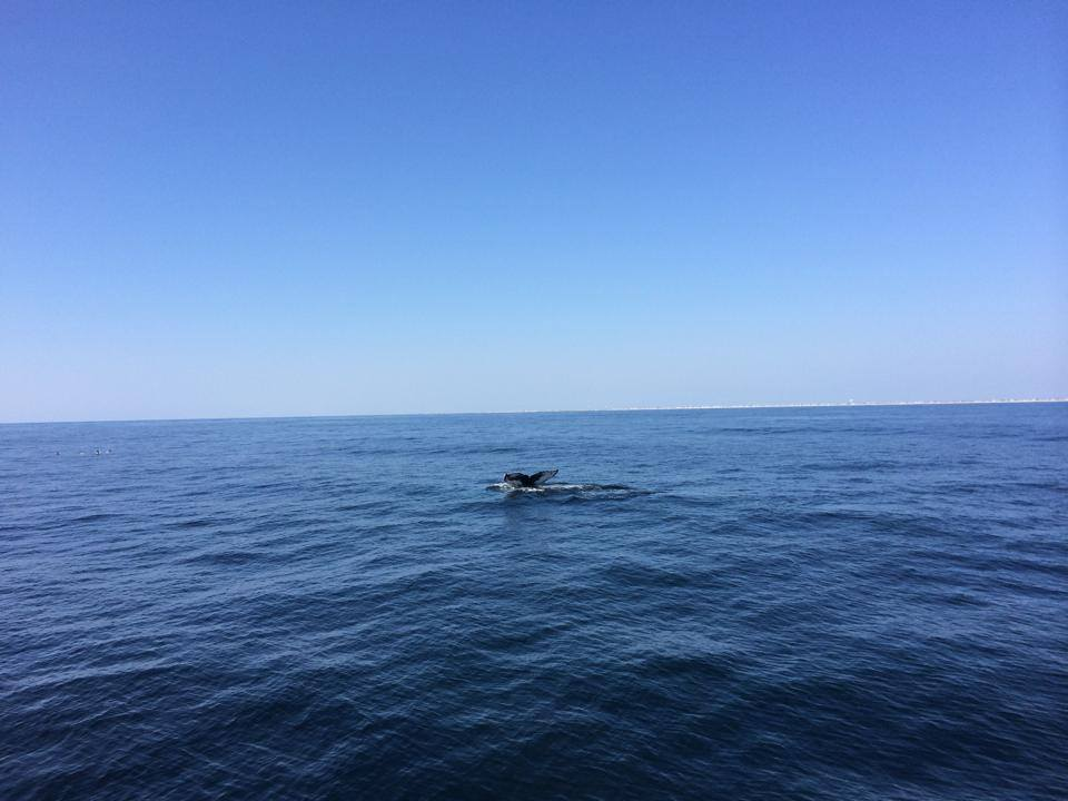 A whale off Barnegat Inlet. (Photo: USCG Station Barnegat Light)