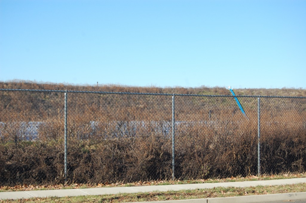 Overgrowth at the former French's Landfill property on Sally Ike Road. (Photo: Daniel Nee)