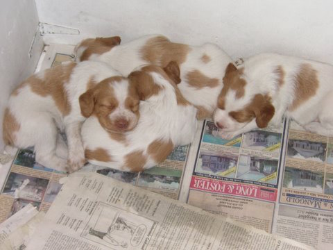 Puppies. ( Craige Moore/Flickr)