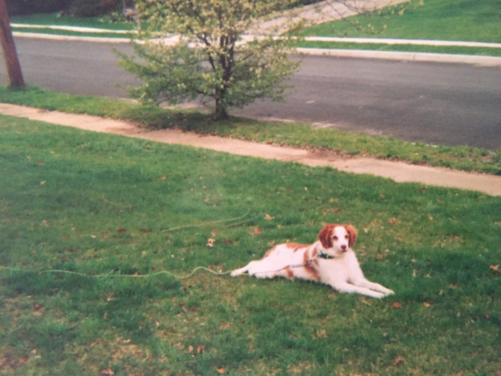 Ginger, hanging out in the front yard in Brick. (Photo: Daniel Nee)