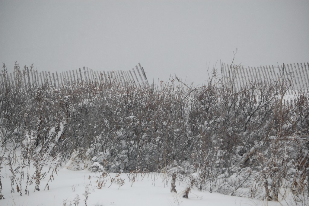 Brick Beach III during the March 5, 2015 snow storm. (Photo: Daniel Nee) Click to expand.