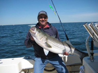 A striped bass caught by a customer on Capt. Jack Shea's Rambunctious on Barnegat Bay. (Photo: Capt. Jack Shea)