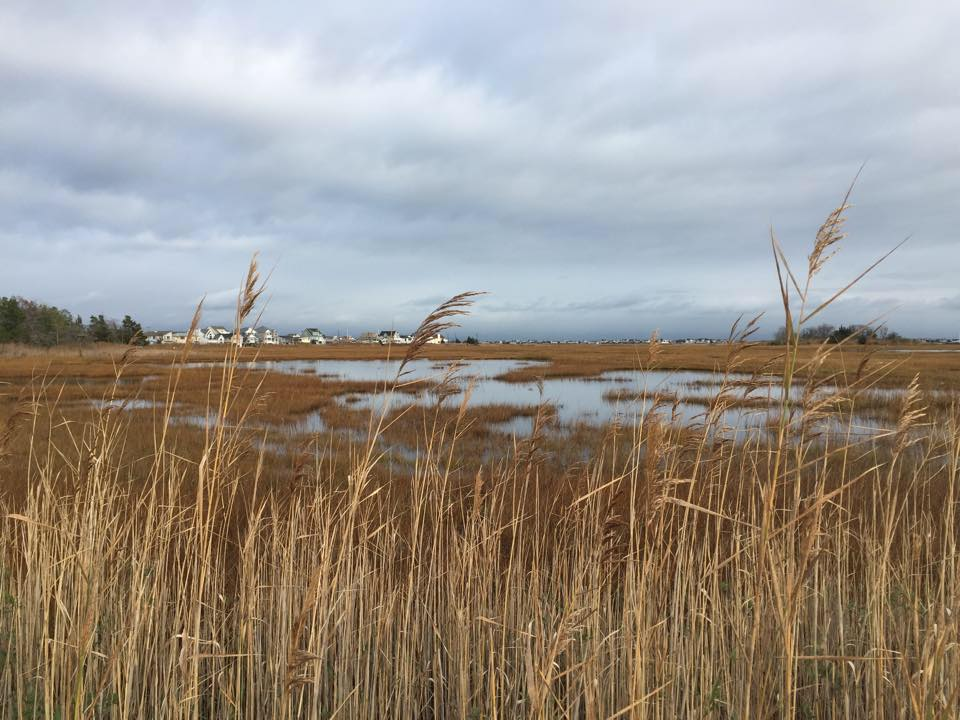 Marshes off Knoll Crest Avenue in the Seawood Harbor section. (Photo: Daniel Nee)
