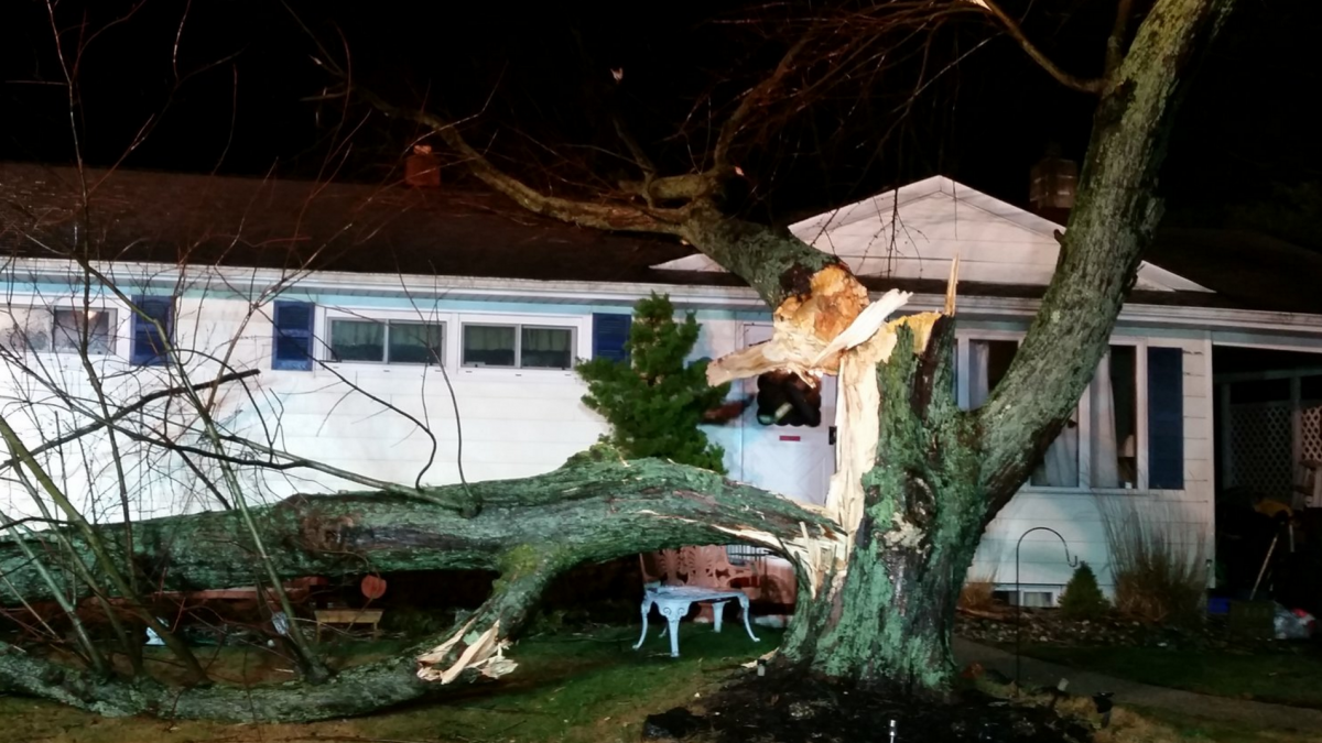 A tree that fell onto a house in Neptune Township. (Photo: Neptune Twp. Police)