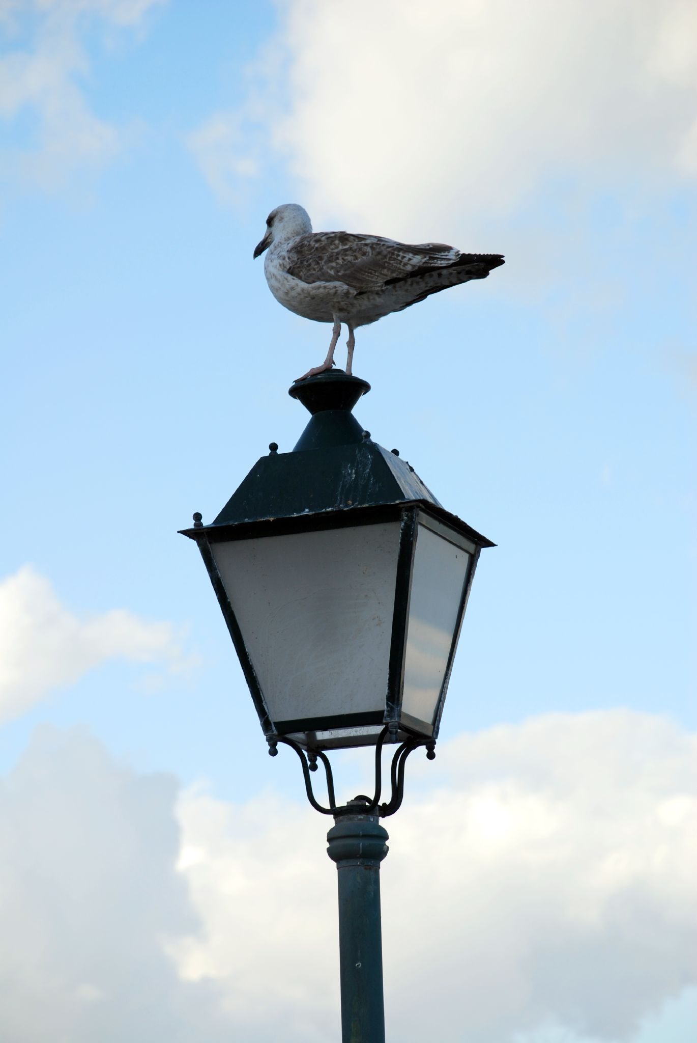 Street lamp. (Photo: Jesus Solana/Flickr)