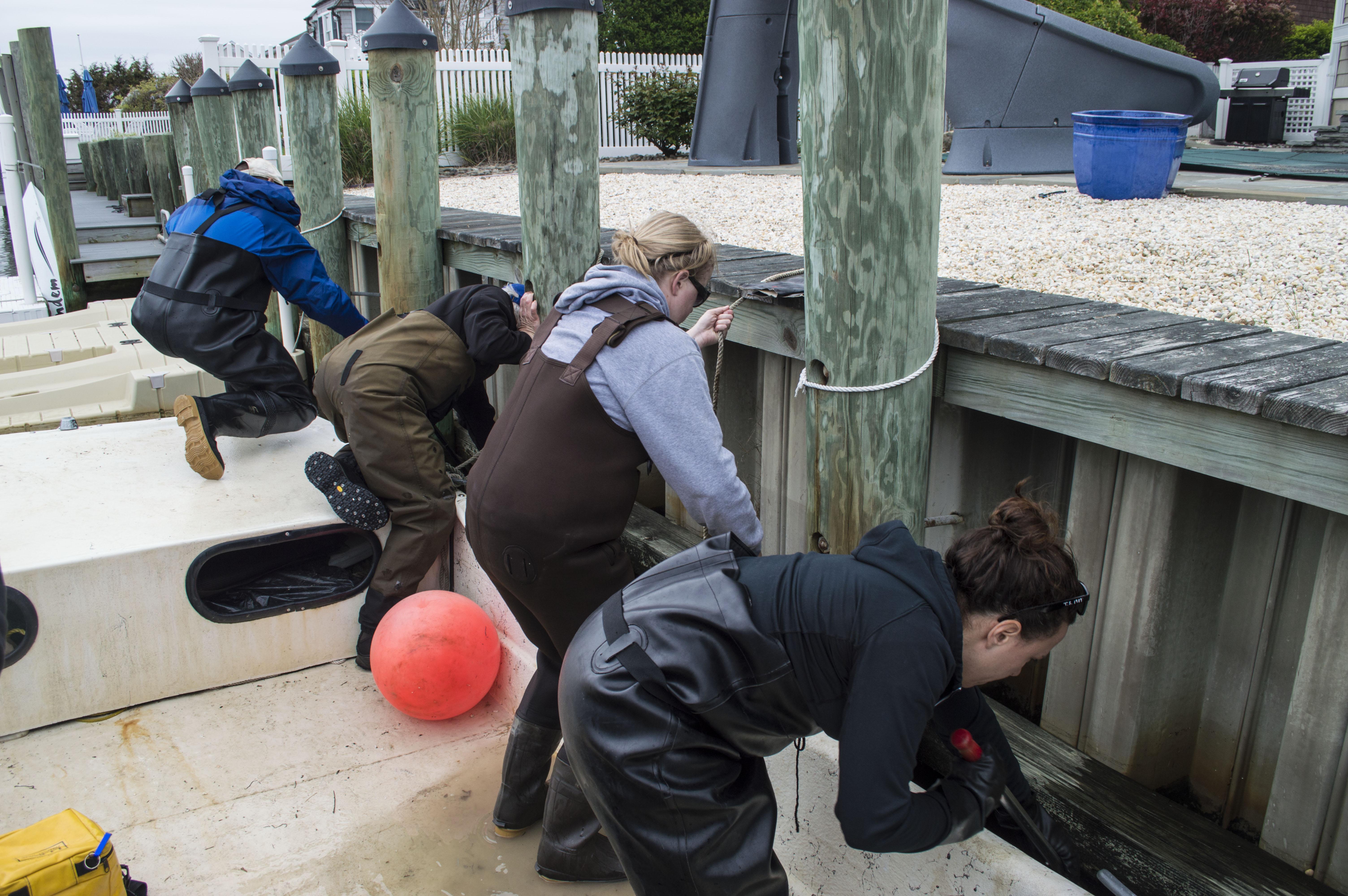 Volunteers scrub away sea nettles in Brick's Curtis Point neighborhood. (Photo: Daniel Nee)