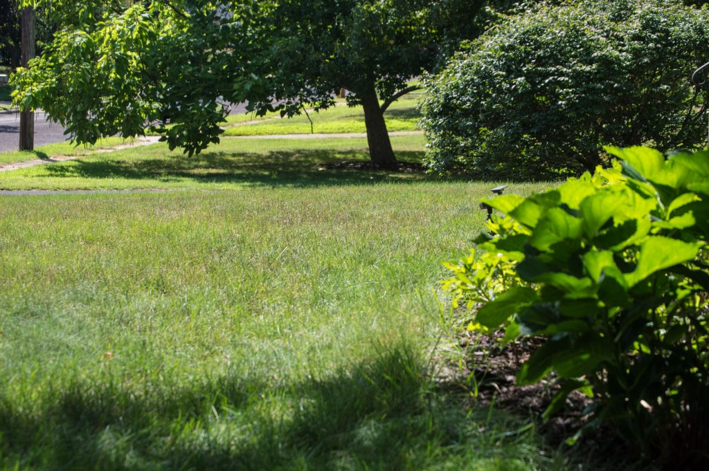 A lawn in Brick Township bakes in the summer sun. (Photo: Daniel Nee)