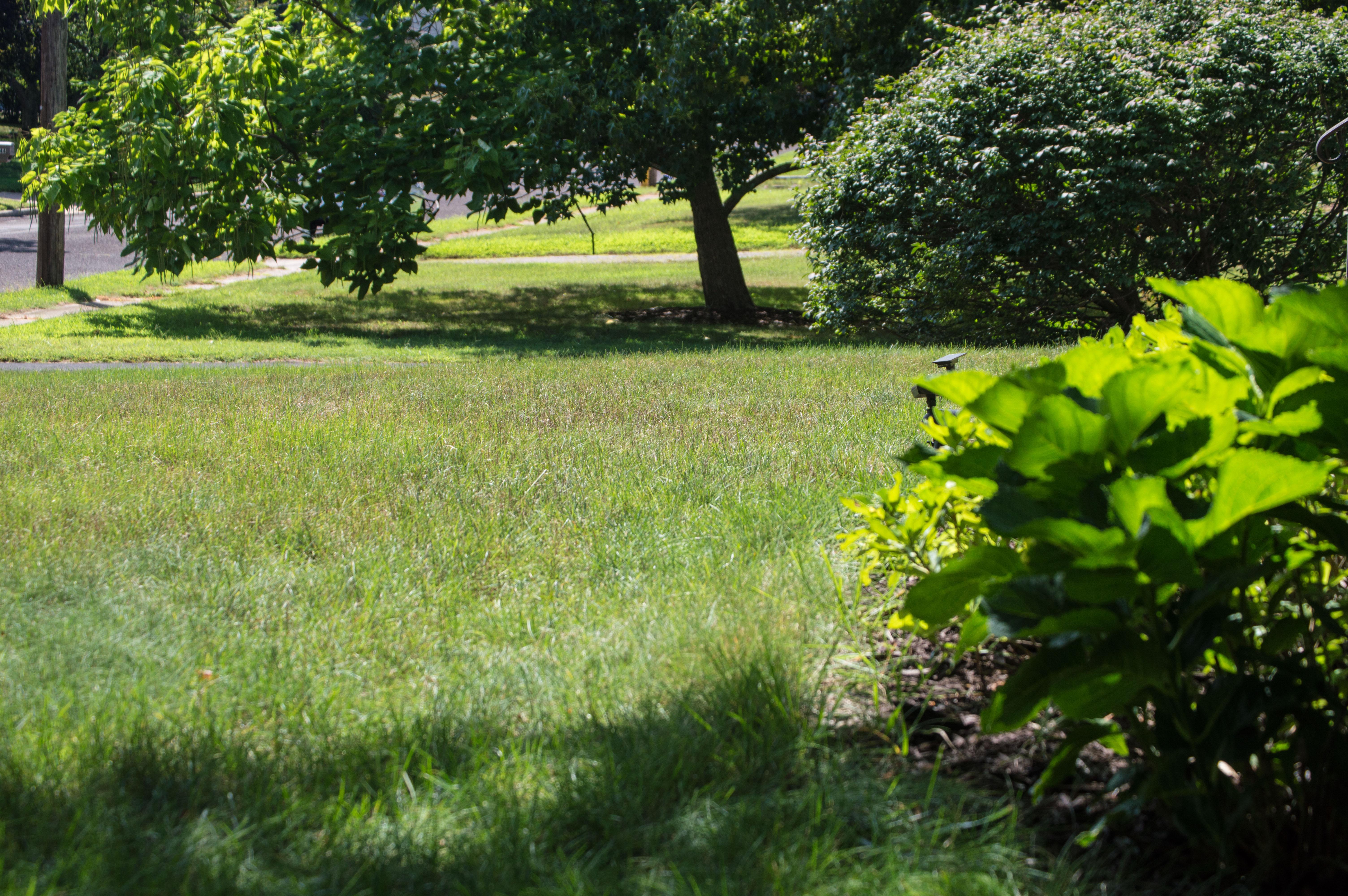 A lawn in Brick Township bakes in the summer sun. (Photo: Daniel Nee)