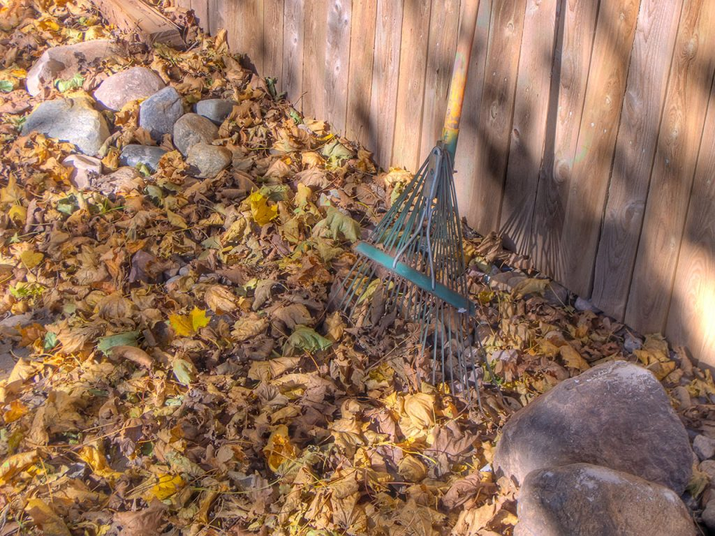 Leaves and a rake. (Credit:  David Morris/ Flickr)