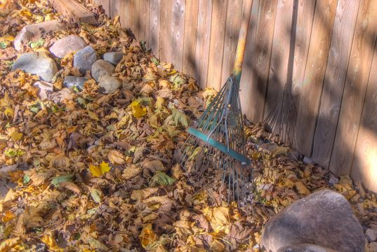 Leaves and a rake. (Credit: David Morris/ Flickr)