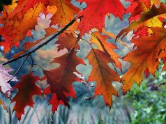 Trees and fall foliage. (Photo: Bernard Spragg/ Flickr)