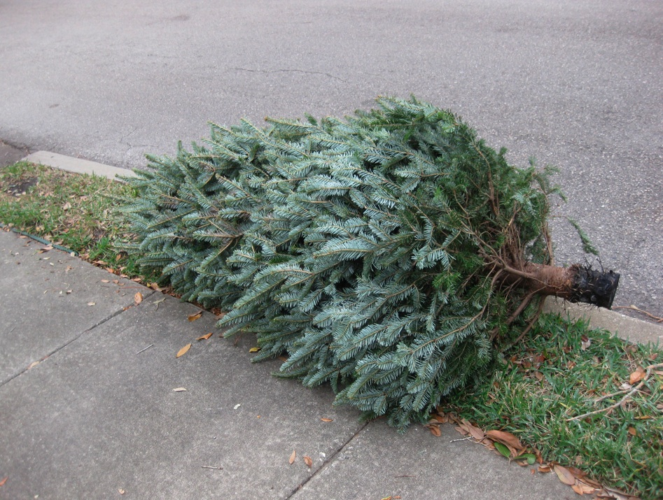 Christmas tree at the curb. (File Photo)