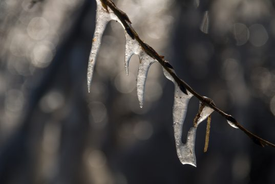 Ice/Freezing Rain (Photo: Susanne Nilsson/ Flickr)