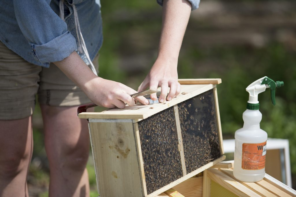 A beekeeper tends to his hive. (Credit: COD Newsroom/ Flickr)