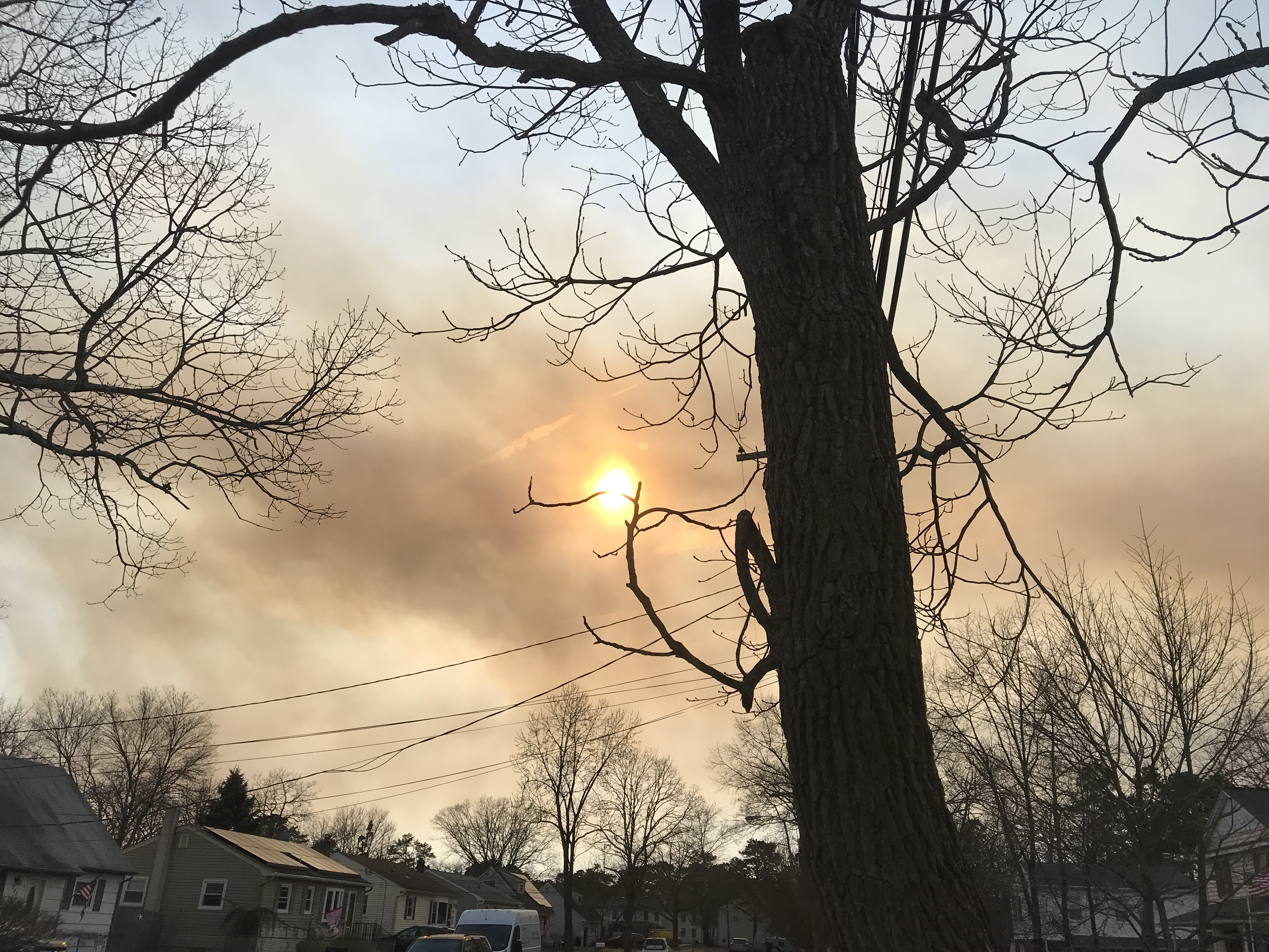 A forest fire in the New Jersey Pinelands, March 30, 2019. (Photo: Daniel Nee)