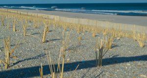 Dune grass grows in Brick, N.J., March 10, 2019. (Photo: Daniel Nee)