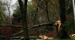 Damage from a severe storm, April 21, 2020, in Herbertsville. (Credit: Steven Houghtaling/Facebook)