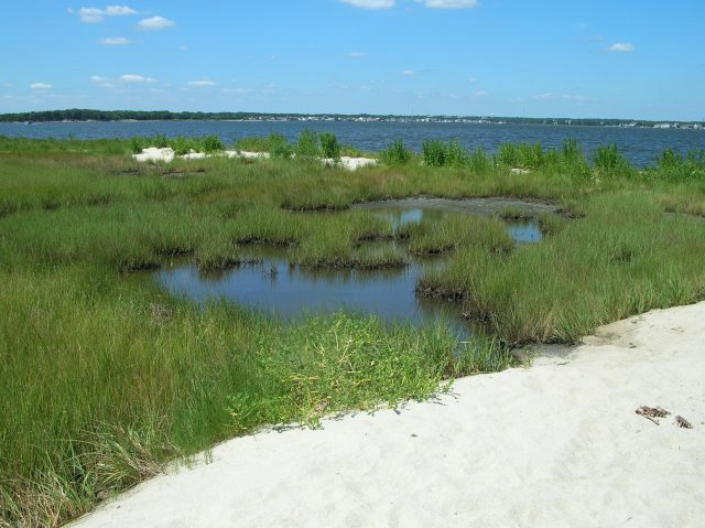 Cattus Island County Park (Barnegat Bay Partnership)