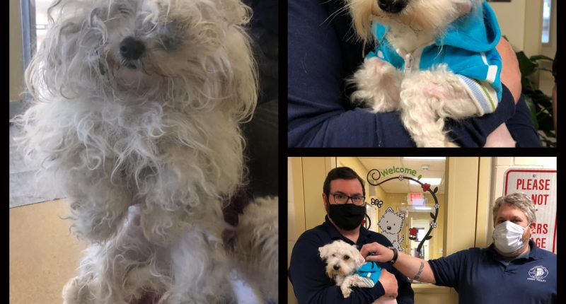 Two dogs found abandoned outside the Ocean County Mall, March 13, 2021. (Photo: TRPD)